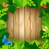 Quadro verde da folha do verão com as borboletas na superfície da madeira Fotos de Stock