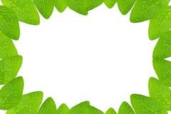 Quadro verde fresco da folha no fundo branco imagem de stock