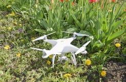 Quadrocopter DJI幽灵4位于有红色郁金香花的一个草甸 免版税库存照片