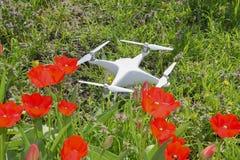 Quadrocopter DJI幽灵4位于有红色郁金香花的一个草甸 图库摄影