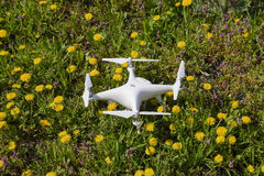 Quadrocopter DJI Phantom 4 is on a clearing with dandelion flowers. Royalty Free Stock Image