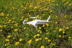 Quadrocopter DJI Phantom 4 is on a clearing with dandelion flowers. Stock Photo