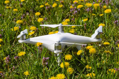 Quadrocopter DJI Phantom 4 is on a clearing with dandelion flowers. Stock Photos