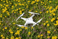 Quadrocopter DJI Phantom 4 is on a clearing with dandelion flowers. Stock Photography