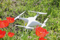 Quadrocopter DJI Phantom 4 is located on a meadow with red tulip flowers. Krasnodar, Russia - April 14, 2017: Quadrocopter DJI Phantom 4 is located on a meadow Stock Photography