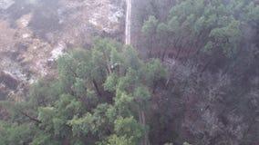 Quadrocopter flyger över skogvägen lager videofilmer