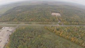 Quadrocopter, sorvolante il giorno nuvoloso di autunno della foresta di autunno archivi video