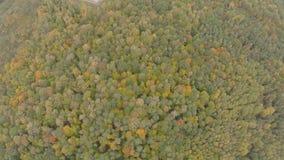 Quadrocopter, volando durante el día nublado del otoño del bosque del otoño almacen de video