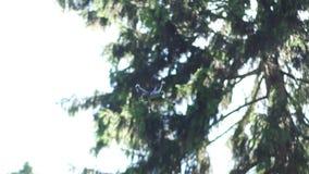 Quadrocopter vuela sobre la cámara lenta del bosque metrajes