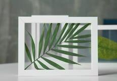 Quadros brancos com as folhas verdes na tabela Fotos de Stock
