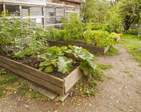 Quadros de jardim de madeira Fotografia de Stock