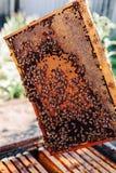 Quadros de uma colmeia da abelha Apicultor que colhe o mel O fumador da abelha fotografia de stock