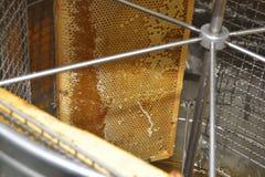 Quadros do favo de mel imagem de stock