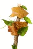 Quadros indicadores de madeira Imagem de Stock