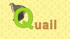 quaglie Alfabeto inglese dello ZOO - lettera Q illustrazione di stock
