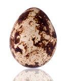 Quaglie egg Immagine Stock Libera da Diritti