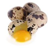 Quaglie egg Fotografia Stock