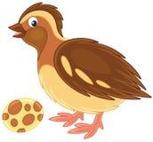 quail stock illustrationer