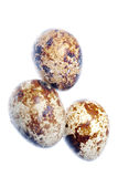 Quail bird egg isolated Royalty Free Stock Images