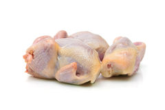 Quail carcass closeup on a white background. Stock Images