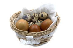 quail and chicken eggs in a basket closeup on white Royalty Free Stock Photography