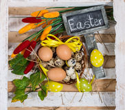 Quail and chicken eggs in a basket with spring greens Stock Images