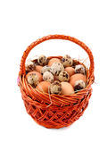 Quail and chicken eggs in a basket - white background Royalty Free Stock Photo