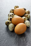 Quail and chicken eggs. With a stone black background Stock Image