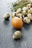 Quail and chicken eggs with thyme. On a black stone surface Royalty Free Stock Images