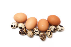Chicken eggs and quail Stock Photo
