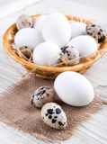 Quail and chicken eggs Royalty Free Stock Photo