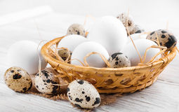Quail and chicken eggs in a wicker basket Stock Photography