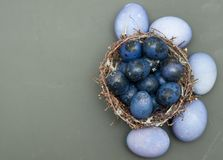 Quail colorful eggs in a nest on stone background. Stock Photography