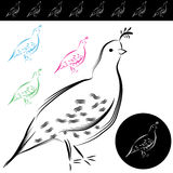 Quail Drawing. An image of a quail drawing Stock Photography