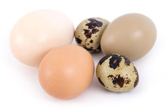 Quail duck chicken and pheasant egg Royalty Free Stock Photos
