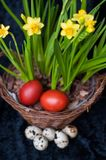 Quail and dyed eggs, wicker basket. Easter eggs and plants stock photos