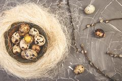 Quail Easter eggs in the nest on grey background with willow branch royalty free stock photo