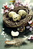 Quail easter eggs in a nest Stock Image