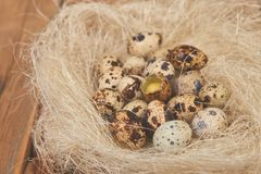 Quail easter eggs in the nest on wooden background. Quail eggs in the nest on wooden background. Happy easter. Top view. Free space. Flat lay. Spring. Easter egg royalty free stock photography