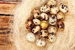Quail  easter eggs in the nest on wooden background stock photos