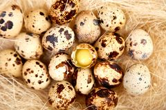 Quail  easter eggs in the nest on wooden background royalty free stock image