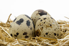 Quail Egg 1. Organic Quail Egg protein food Royalty Free Stock Photos