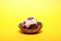 Quail egg. Stock Image