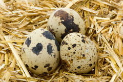 Quail Egg 2. Organic Quail Egg protein food Royalty Free Stock Photos