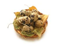Quail egg. In braided basket Stock Photography