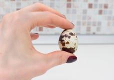 Quail egg Arkivfoto