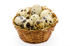 Quail Egg basket. Organic Quail Egg protein food Stock Photo