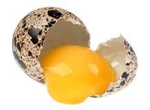Quail egg broken Royalty Free Stock Image