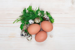 Quail egg chicken herbs. On the table lay eggs with dill and parsley Royalty Free Stock Photos