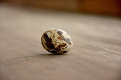 Quail egg. Close-up of a single quail egg, on a wooden background Royalty Free Stock Images